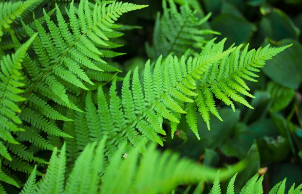 follow-the-colours-plantas-purificam-ar-nasa-10
