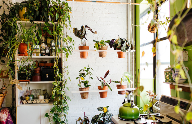 follow-the-colours-apartamento-plantas-Summer-Rayne-Oakes-03