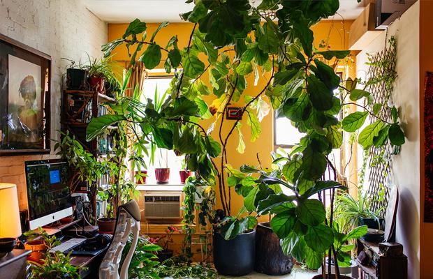 follow-the-colours-apartamento-plantas-Summer-Rayne-Oakes-05