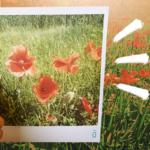 Já pensou em receber na sua casa, todos os meses, fotos surpresas das suas redes sociais? Conheça a Phosfato