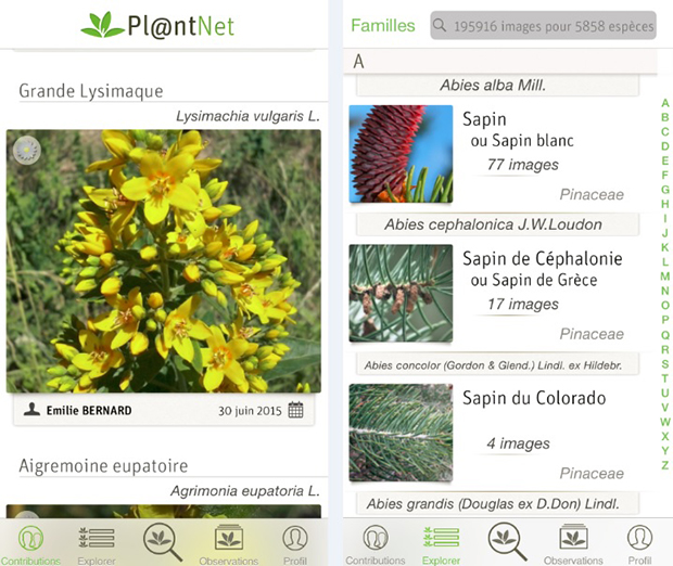 follow-the-colours-aplicativo-identifica-plantas-plantnet-02