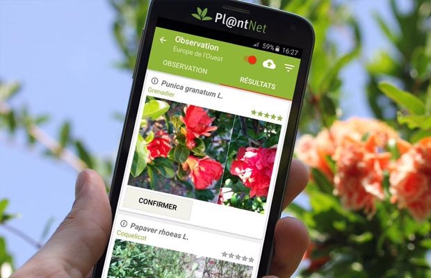aplicativo Pl@ntNet plantas