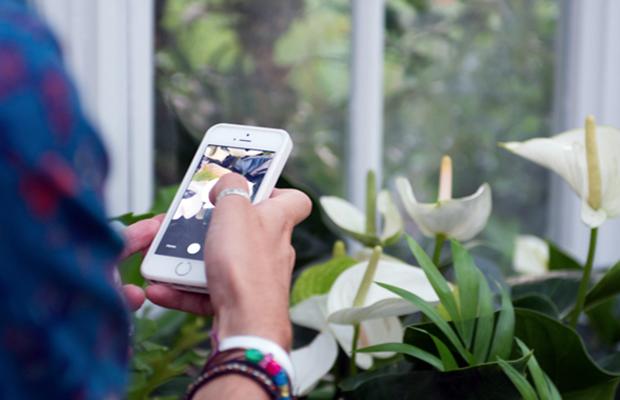 follow-the-colours-aplicativo-identifica-plantas-plantnet-04