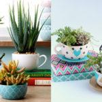 Tendência na decoração: plantar suculentas e cactos em xícaras. Aprenda passo a passo!