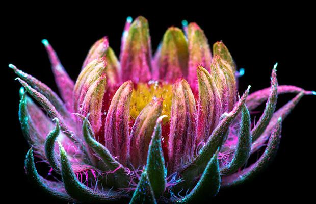 fotografia ultravioleta Craig Burrows