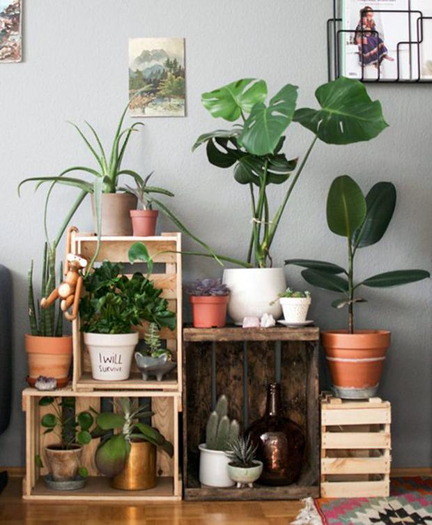 Al m da decora o 12 raz es fant sticas e cient ficas for Como hacer adornos con plantas naturales