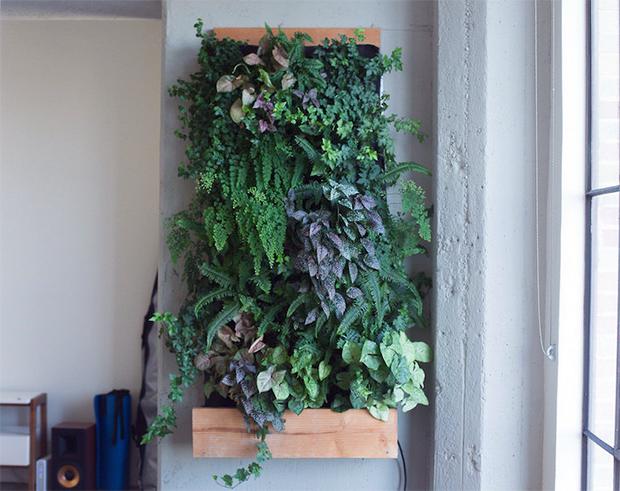 945b0bc31 5 ideias baratas de como montar o seu jardim vertical ou horta suspensa  orgânica em casa