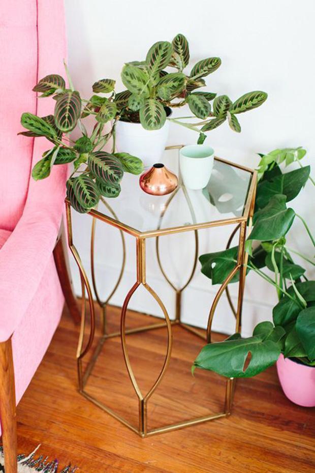maranta plant