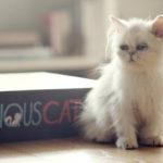 O Gato Mais Curioso do Mundo livro