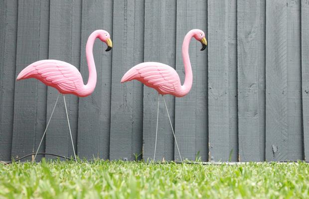 Resultado de imagem para os flamingos kitsch dos estados unidos