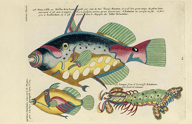 Louis Renard livro peixes